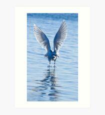 Gutsy Gull Art Print