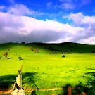 Green Pastures  by cjcphotography