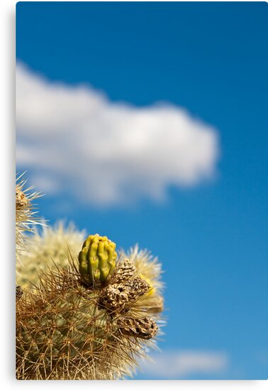 Jumping Cholla Cactus Detail by Nickolay Stanev
