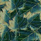 Leaves drawing  by MEDUSA GraphicART
