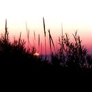 Sunset in Beach Grass I by Megan Noble
