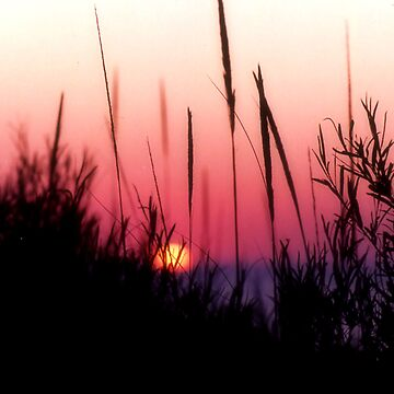 Sunset in Beach Grass II by NobleImages