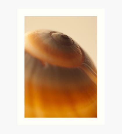 Amber Shell Art Print
