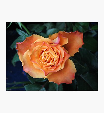 Soft and Gentle Rose Photographic Print