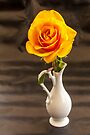 Yellow Rose - Still Life by DPalmer
