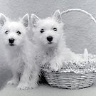 the Puppy Basket by ionclad