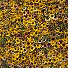 Massed Sunflowers by Stephen  Shelley