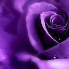 Purple Rain by ~ Butterfly ~