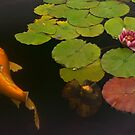 Orange Koi And Flower by Larry Costales
