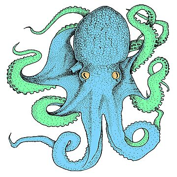 Colorful Octopus | Ocean Life | Sea Animal | Oceanography | Natural History Illustration | Zoology by encyclo-art