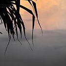 Sunset light by Renee Matheson