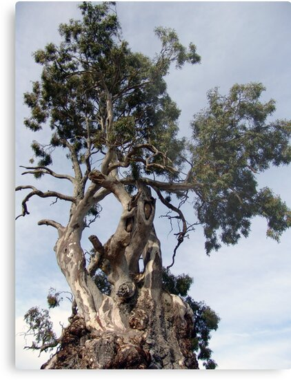 Grand Old Tree by Dentanarts