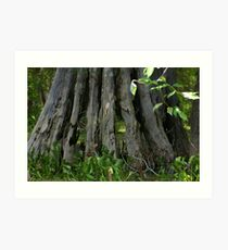 Hollowed Cypress Art Print