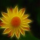 Summer Glow by ArkansasLisa