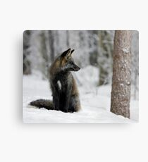 Silver Fox in Snow Canvas Print