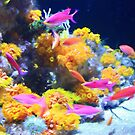 Pink Anthias and Coral by Bonnie M. Follett