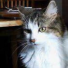 Feline Furball by BlueMoonRose