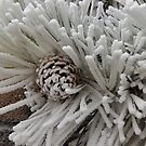 Frosted Pine Cones Winter Wonderland by Edith Snow