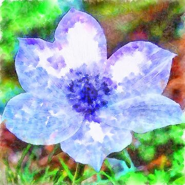 Blue Anemone Watercolor by taiche