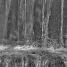 Splashing by Rosalie M