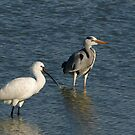 Grey Heron and Spoonbill by MichaelBr