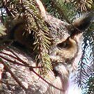 PNW Raptor - Great Horned Owl by tkrosevear