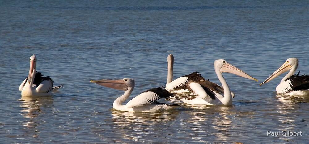 Pelican dance by Paul Gilbert
