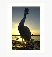 Curious swan Art Print