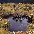 Alpine pond - Table Mountain, Tasmania by Syd Winer