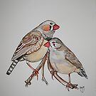 Zebra Finch by Katie Young