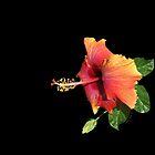 YELLOW AND ORANGE HAWAIIAN BEAUTY by Shirley Kathan-Sayess