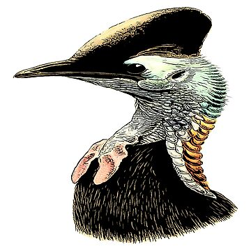 Cassowary Ratite Bird by EncycloArt | Australian Birdwatching | Flightless Bird | Living Dinosaur by encyclo-art