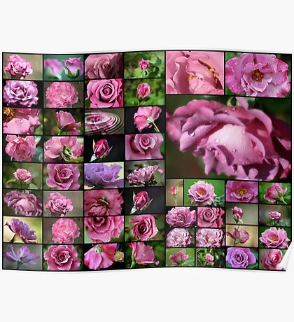 50 Angel Face Roses Poster