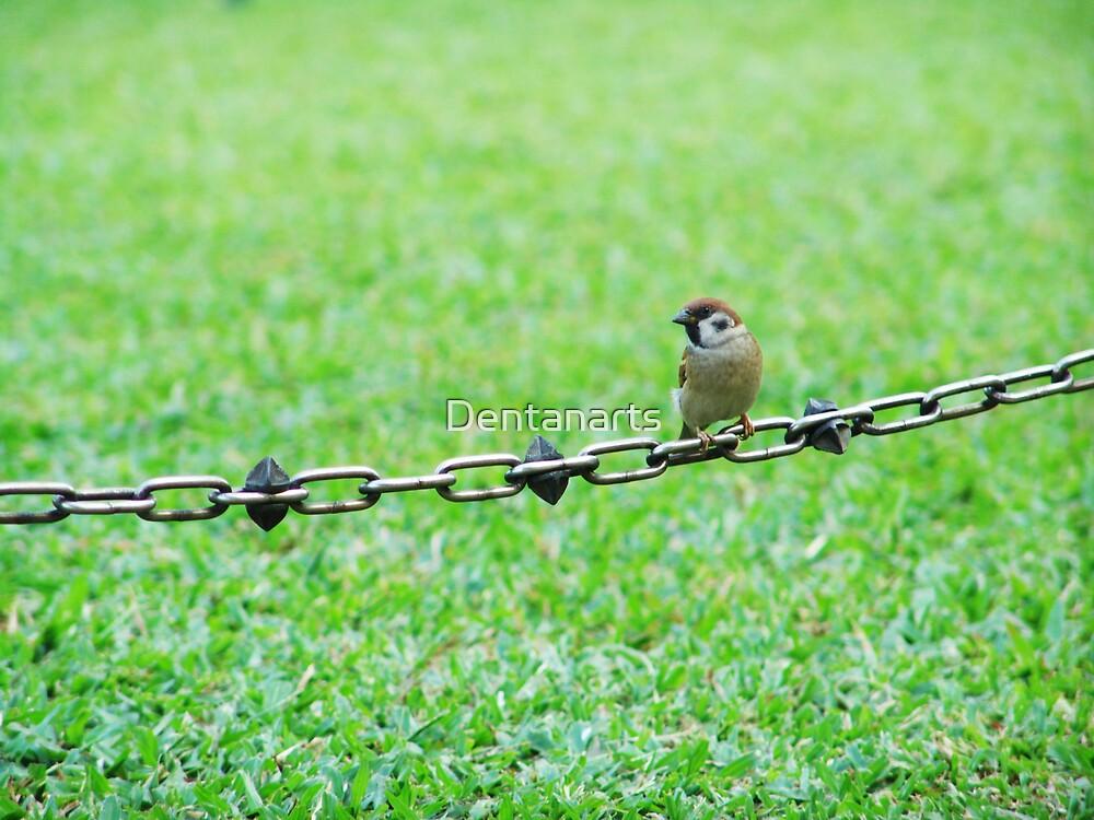 Bird on a Chain by Dentanarts