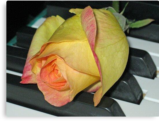 Christmas Rose by BlueMoonRose