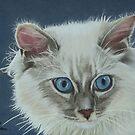 Rag Doll Cat by cathyscreations