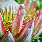Alien Flower by Justus Herrmann