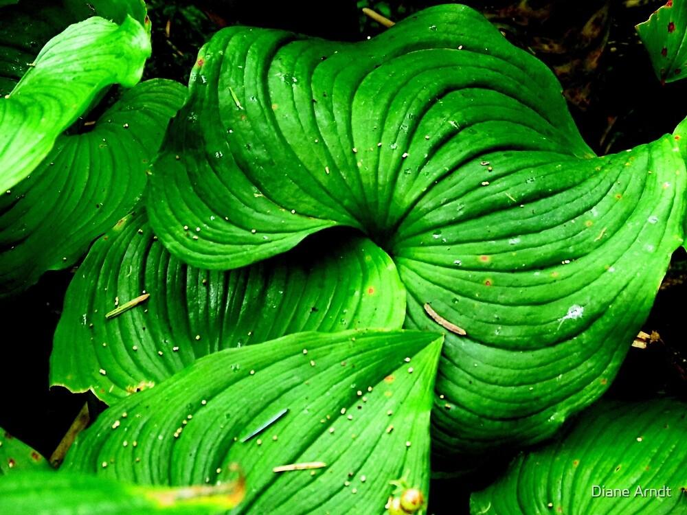 Green..Forest at Neptune Beach..Yachats, Oregon...Wild Hosta by Diane Arndt