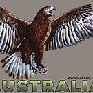 Australian Eagle by iancoate