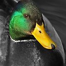Green & Yellow by Robert Abraham