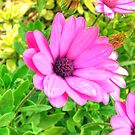 Flower in HDR by Rosalie M