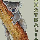 Australian Koala by iancoate