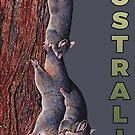 Australian Possum by iancoate