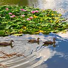 Ducks on the Pond by Bette Devine
