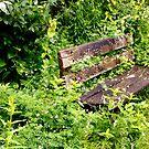 Overgrown Garden Bench by John Wallace
