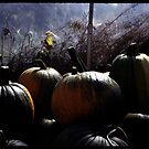 Pumpkins in a Greenhouse by Wayne King