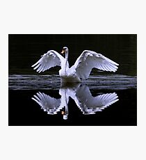 Swan and Reflection ... Two for One Photographic Print