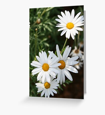 A Bunch Of Sunshine Greeting Card