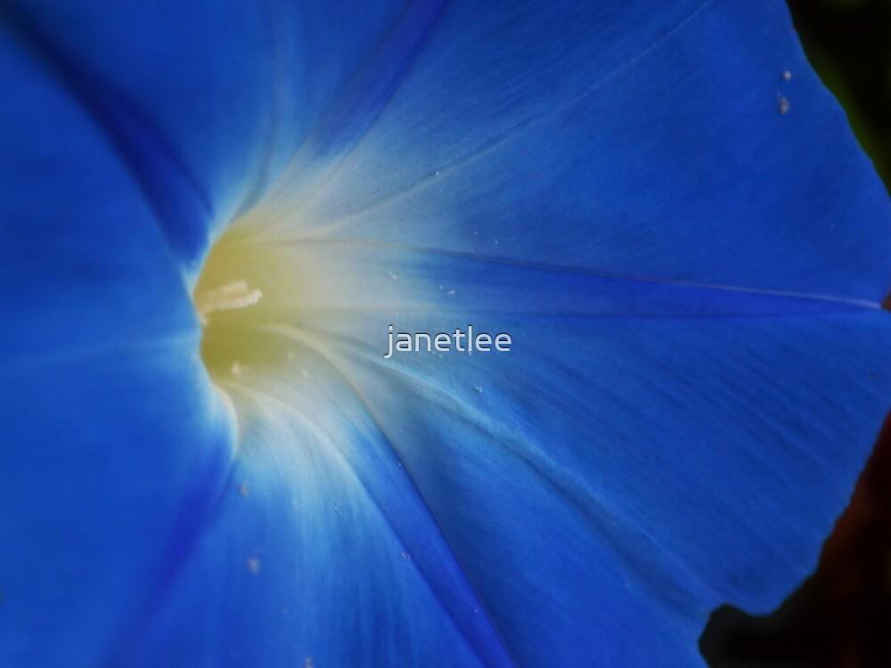 Heavenly Blue by janetlee