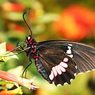 ~butterfly~ by Terri~Lynn Bealle
